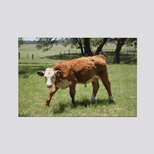 Hereford Calf at the LBJ Ranch Rectangle Magnet